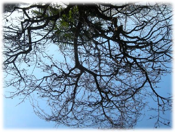 13匹の猫たちが苦しみ絶叫する声を聞いた木