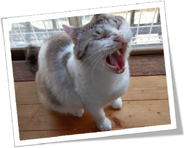 心の叫び 猫の叫び