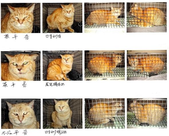 地域猫2img024