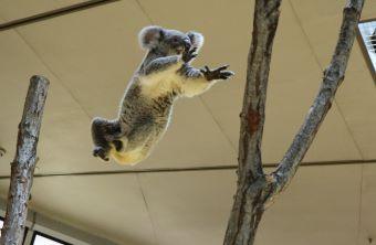 横浜市立金沢動物園 ぼたん 華麗なジャンプ 1