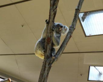 横浜市立金沢動物園 ぼたん 華麗なジャンプ 2