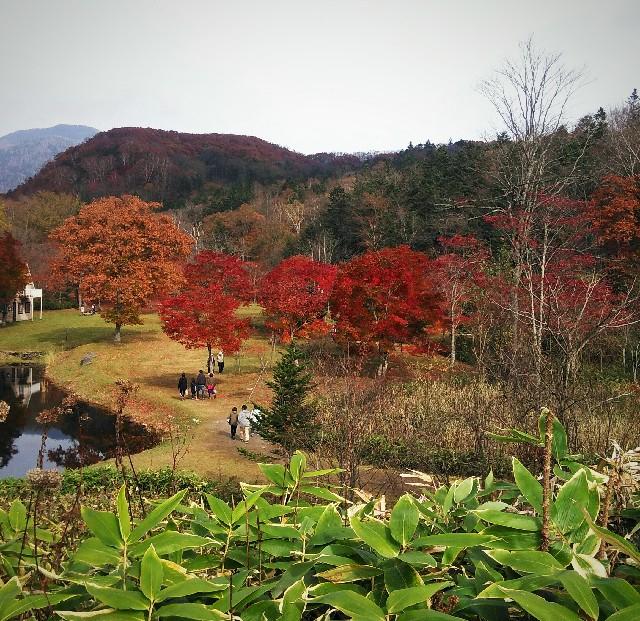 福原山荘の紅葉 写真日記