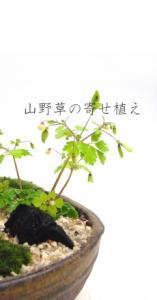 tsukasa-okurimono-yosetop.jpg