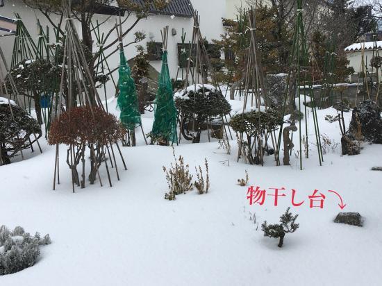 記録的な雪の少なさ2020①