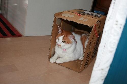 箱と言えば1