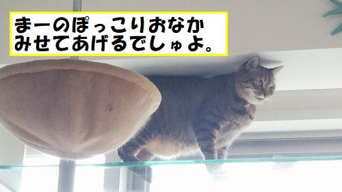 IMG_0955ぽっこり