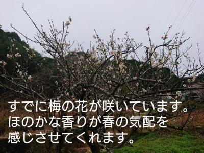 he13-3b-05.jpg