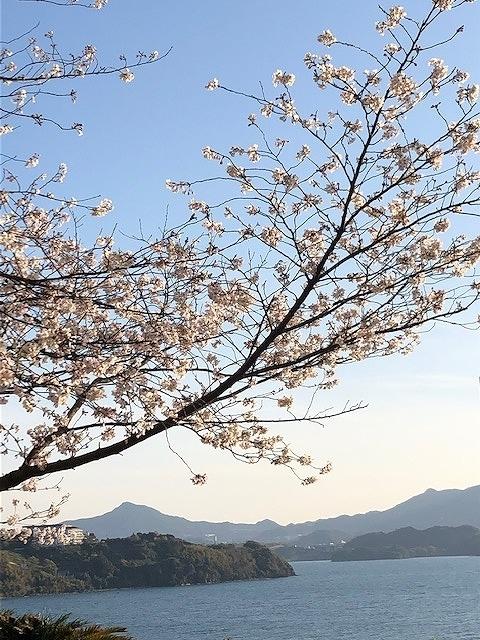 海に突き出す桜