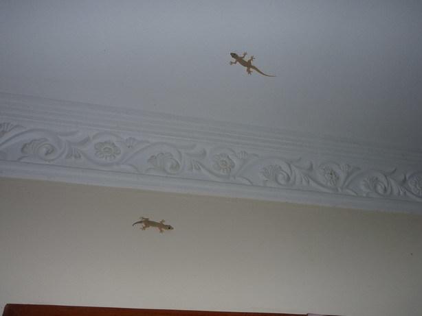 廊下の天井のヤモリ_サイズ変更