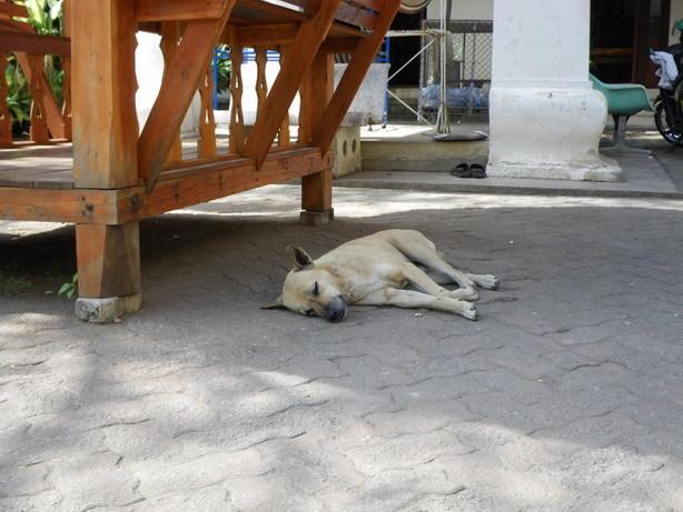 昼寝する犬 Wat Phra Singにて_サイズ変更
