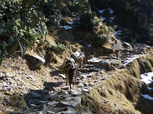 山道を下る馬2_サイズ変更
