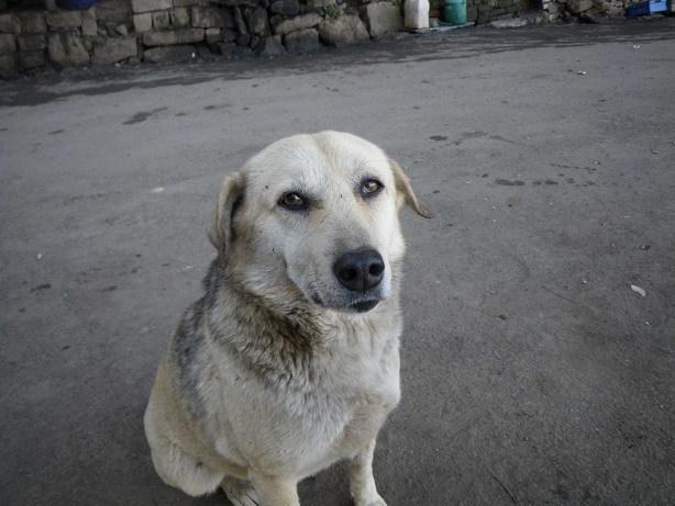 屋台の前の犬_サイズ変更