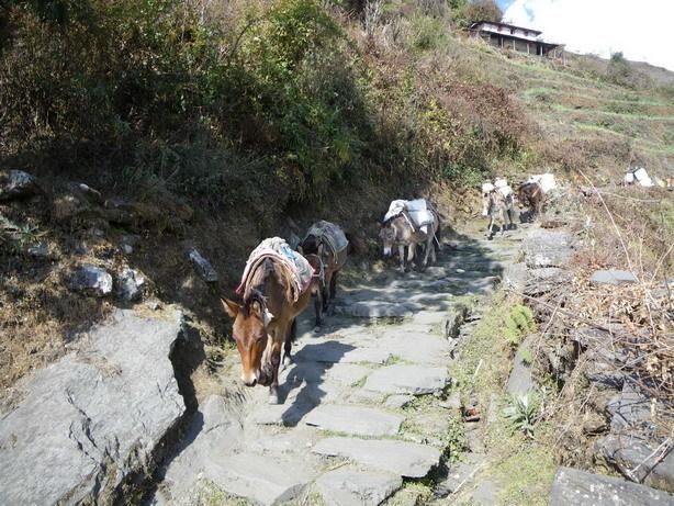 Komrong Dandaへの登り6_サイズ変更