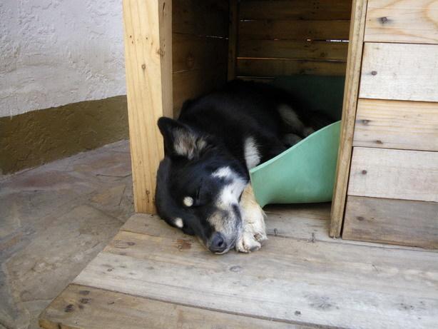 宿の犬_サイズ変更