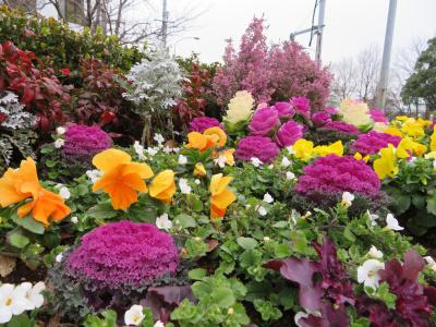 IMG_0361船番所交差点の花壇を見上げる_400