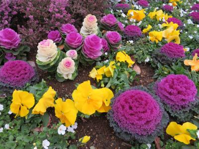 IMG_0359船番所交差点の花壇_400