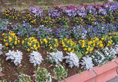 IMG_0371横長の花壇_400