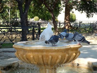 スペイン中東319カディス噴水ハト