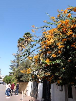 スペイン中東360ラバト街並ブーゲンビリア