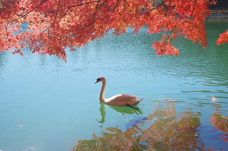 秋の水辺で・・・