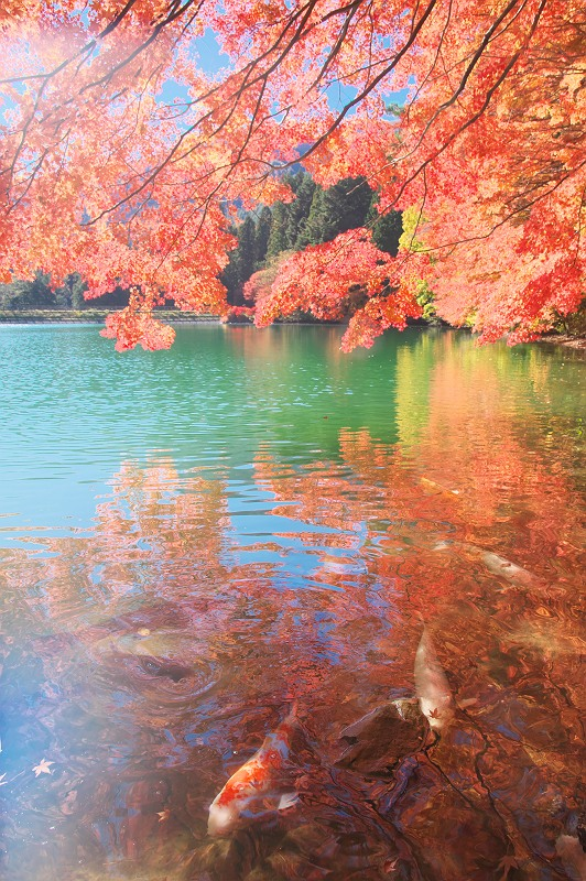 華やかな秋