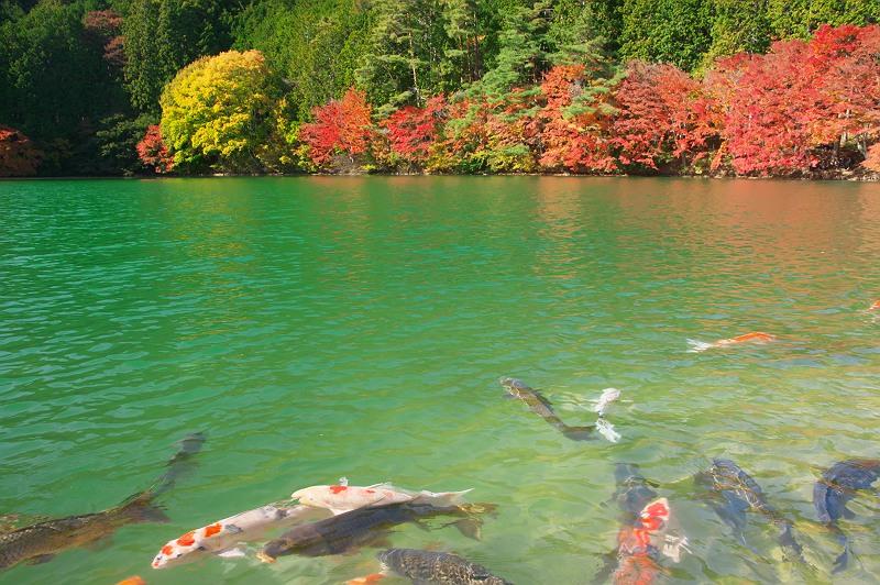 美しき森の湖