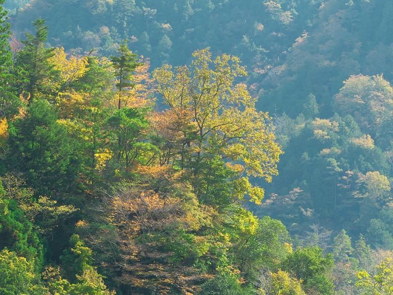 天龍村の秋