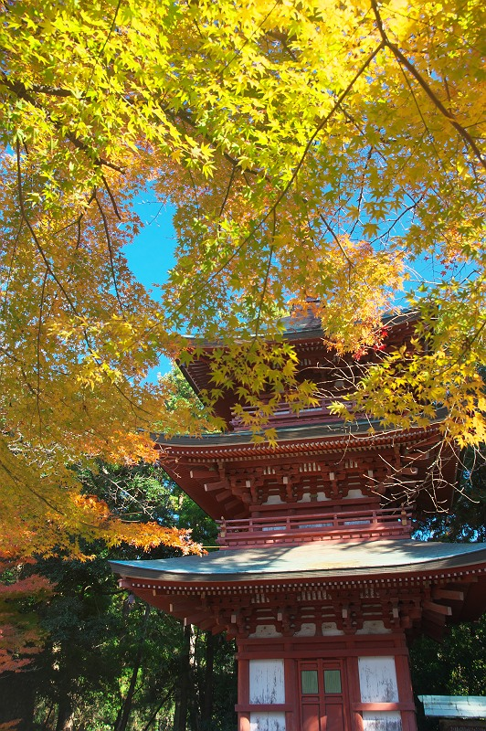 油山寺の秋