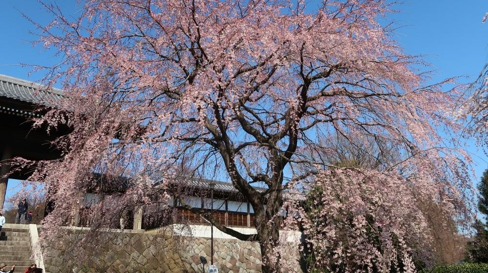 03東郷寺 (1000x561)