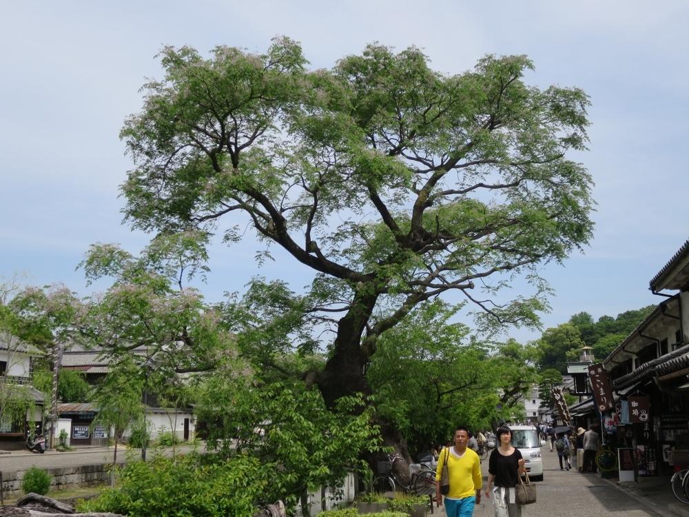 20140518倉敷 (1000x750)