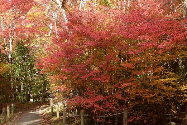 瑞宝寺公園の紅葉