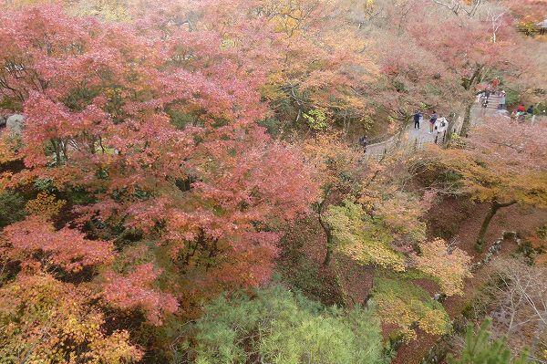 東福寺の紅葉