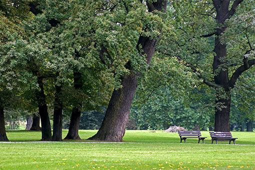 ヴロツワフ クレチンスキ公園のベンチのある風景