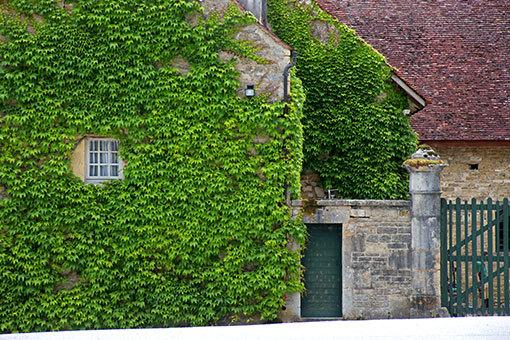 フォントネー修道院 石造りに蔦が這う