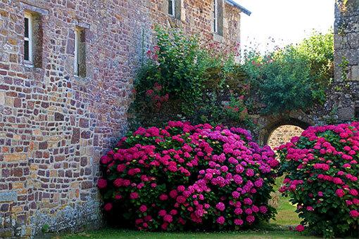 リュセルヌ・ドゥトゥルメール修道院 ピンクのアジサイ