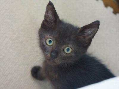 s-cat_129878_5.jpg