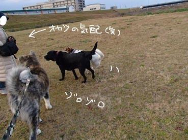 連れ散歩7