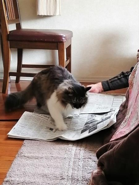 楽しい新聞1