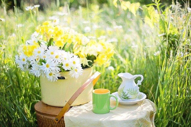 daisies-1466860_640.jpg