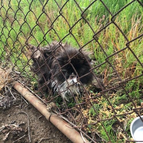 調整池に捨てられた猫たち004