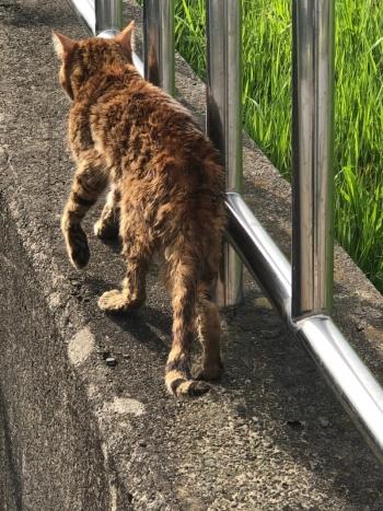 調整池に捨てられた猫たち001