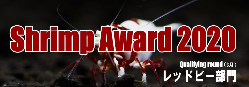 award2020redbee.jpg