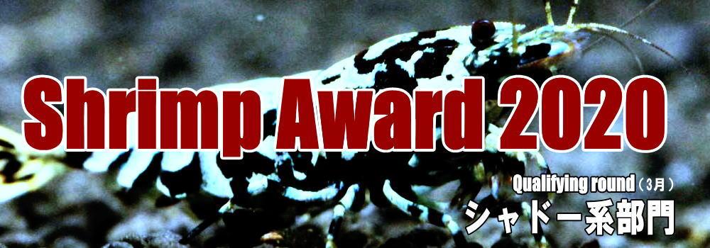 award2020shadow.jpg