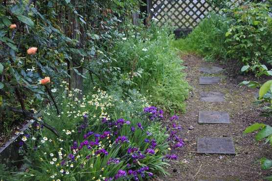 20200503 雨の庭②