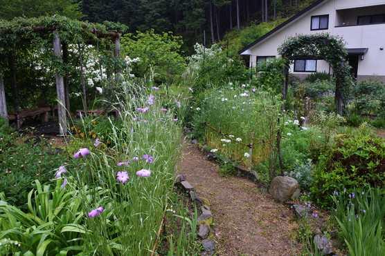 20200503 雨の庭③