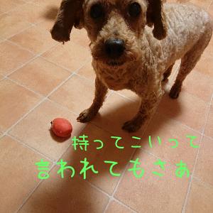 せなたまご (6)
