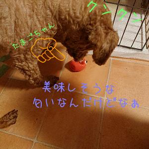 せなたまご (7)