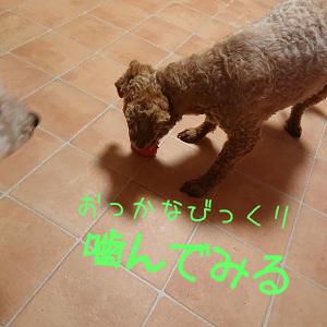 せなたまご (3)