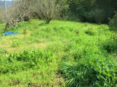 200404畑北側最上部も草だらけ