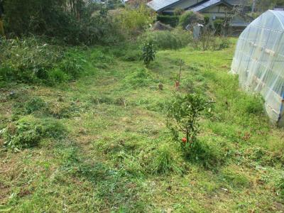 200403ハウスの後ろも草刈り